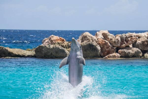 Dolphin Cruise Sandestin Florida